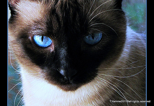 目の下がピクピクと痙攣、症状と原因!ブルーライトの影響について