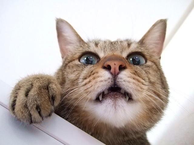 猫の表情:まじでっ!