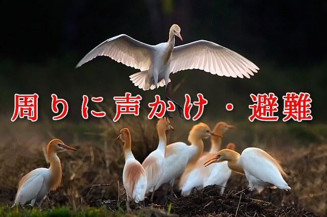 周囲に声かけ・避難(親鳥と仲間たち)